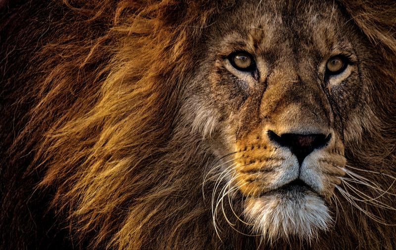 Die Höhle der Löwen ist schlecht für dich.